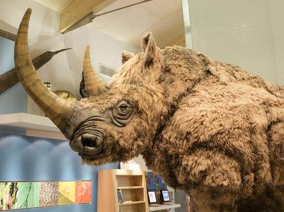 'Spike' the Woolly Rhino