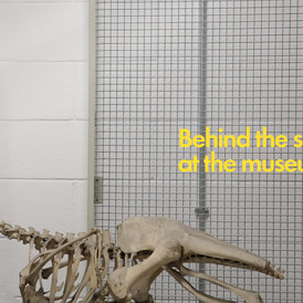 Behind the scenes at the museum